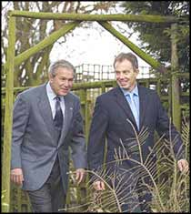Tony Blair continues to lead the world around the mulberry Bush, and feeds us up with layers of lies, steeped in the blood of more than twenty thousand Iraqis.