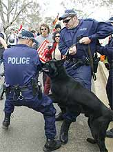 A police dog bites a policeman during crowd control activities at the USA embassy, Canberra.