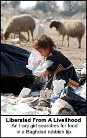 Liberated from a livelihood, and Iraqi girl searches for food in a Baghdad rubbish tip.
